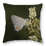 Hairstreak Butterfly Throw Pillow