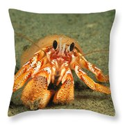 Hairy Hermit Crab Throw Pillow