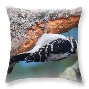 Hairy Woodpecker 2 Throw Pillow
