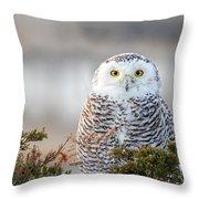 Hampton Beach Nh Snowy Owl Throw Pillow