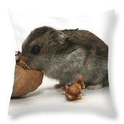 Hamster Eating A Walnut  Throw Pillow