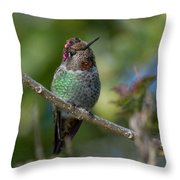 Curly Top Hummer Do Throw Pillow