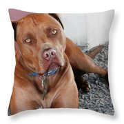 Handsome Red Nose Pit Jak Throw Pillow