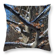 Handsome Romantic Throw Pillow