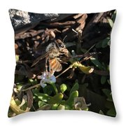 Hang On Honey Bee Throw Pillow