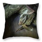 Hanging Big Eared Bat Throw Pillow