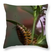 Hanging On Hanging In There Throw Pillow