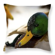 Hanging Out On The Ice Throw Pillow