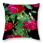 Hanging Roses 2593 Throw Pillow