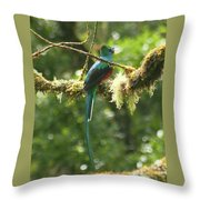 Hanging With The Moss Throw Pillow