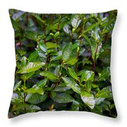 Hangzhou Tea Throw Pillow