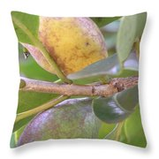 Haole Guava Throw Pillow