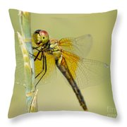 Happy Dragonfly Throw Pillow