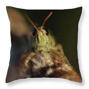 Happy Grasshopper On Cattail Throw Pillow