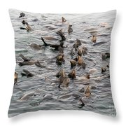 Happy Harbour Seals Throw Pillow