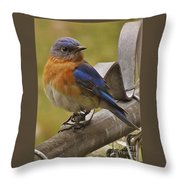 Happy New Year Male Bluebird Throw Pillow