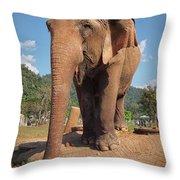 Happy Thai Elephant In Chiang Mai Throw Pillow
