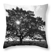 Hapuna Beach Park Throw Pillow