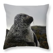 Harbor Seal In Stormy Weather Throw Pillow