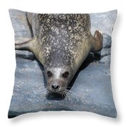 Harbor Seal Ready To Plunge Into The Water Throw Pillow