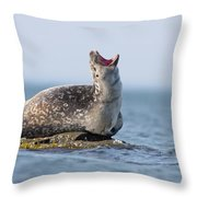Harbour Seal Throw Pillow