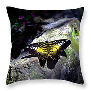 Hard Landing--clipper Butterfly Throw Pillow