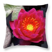 Hardy  Day Water Lily Throw Pillow