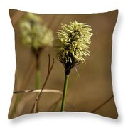 Hare's-tail Cottongrass 1 Throw Pillow