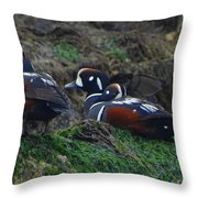 Harlequin Ducks  Throw Pillow