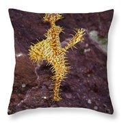 Harlequin Ghost Pipefish - Solenostomus Paradoxus Throw Pillow