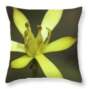 Harper's Beauty #2 Throw Pillow
