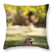 Harris Hawk Looking At Infinity Throw Pillow