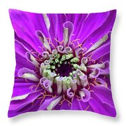 Harry Curly And More Throw Pillow