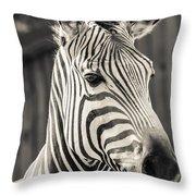Hartmann's Mountain Zebra 2 Throw Pillow