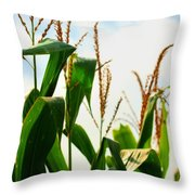 Harvest Corn Stalks Throw Pillow