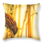 Harvest Time II Throw Pillow