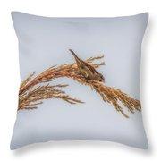 Harvest Time IIi Throw Pillow