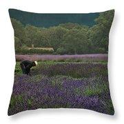 Harvesting The Lavender, Long Island Throw Pillow