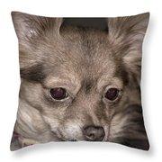 Hattie--foxy Chihuahua Throw Pillow