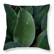 Hosta Dew Drops Throw Pillow