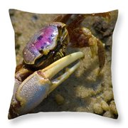 Have You Seen My Fiddle Throw Pillow