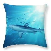 Hawaii Galapagos Shark Throw Pillow