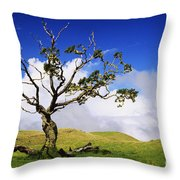 Hawaii Koa Tree Throw Pillow
