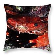 Hawaii Swimming Crab Throw Pillow