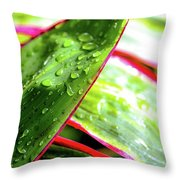 Hawaii Ti Leaves Morning Shower 559 Throw Pillow