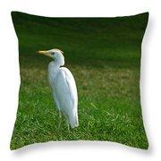 Hawaiian Cattle Egret Throw Pillow