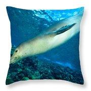 Hawaiian Monk Seal Throw Pillow