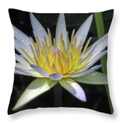 Hawaiian Water Lily 05 - Kauai, Hawaii Throw Pillow
