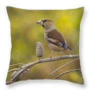 Hawfinch Coccothraustes Coccothraustes Throw Pillow