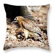 Hawk And Gecko Throw Pillow by George Randy Bass